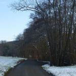 Januar 2013, vor dem Baumfällen